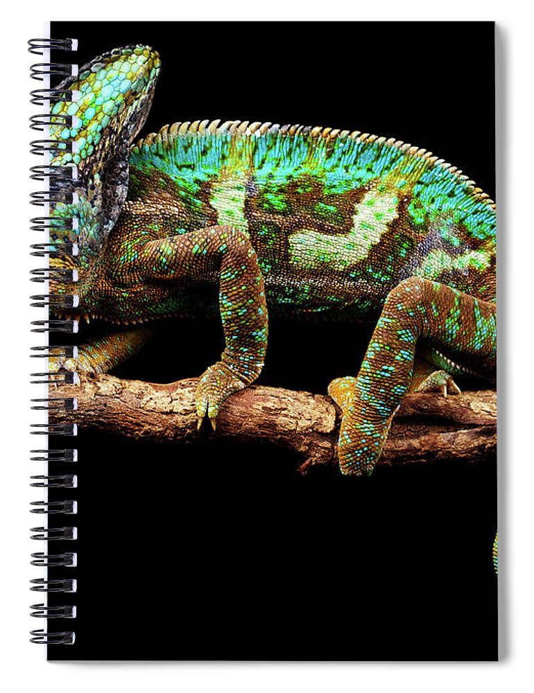 Animal Themes Spiral Notebook featuring the photograph Nice And Slow by Markbridger