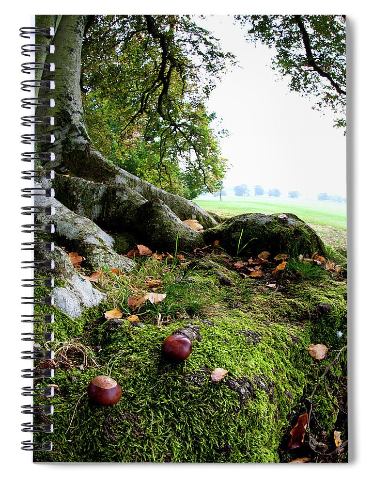 Nut Spiral Notebook featuring the photograph Nuts And Fallen Leaves At The Foot Of A by John Short / Design Pics