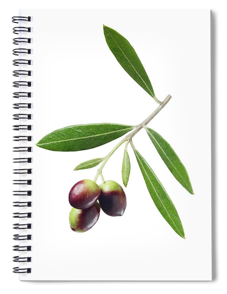 White Background Spiral Notebook featuring the photograph Olives On Branch by Lauren Burke