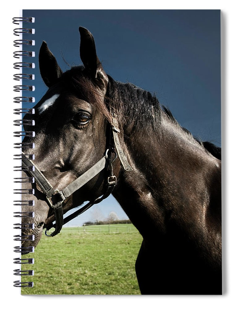 Horse Spiral Notebook featuring the photograph On The Meadow by Pixalot
