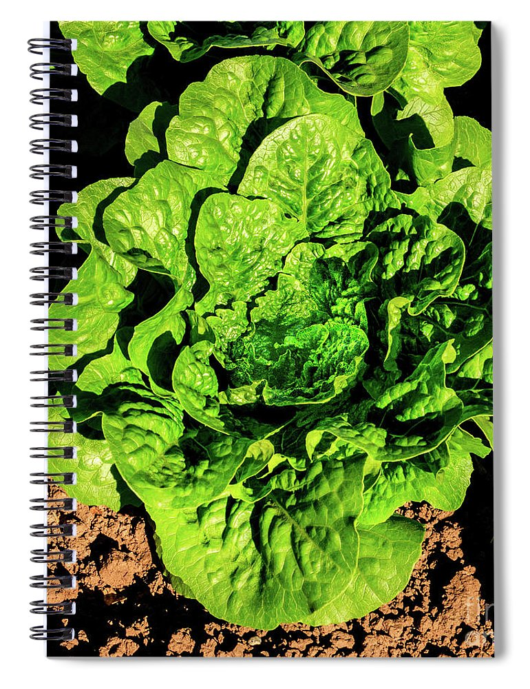 Bunch Lettuce Spiral Notebook featuring the photograph One Bunch Lettuce by Robert Bales