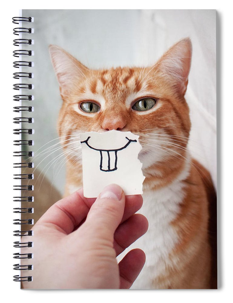Pets Spiral Notebook featuring the photograph Orange Cat Face by Jtsiemer