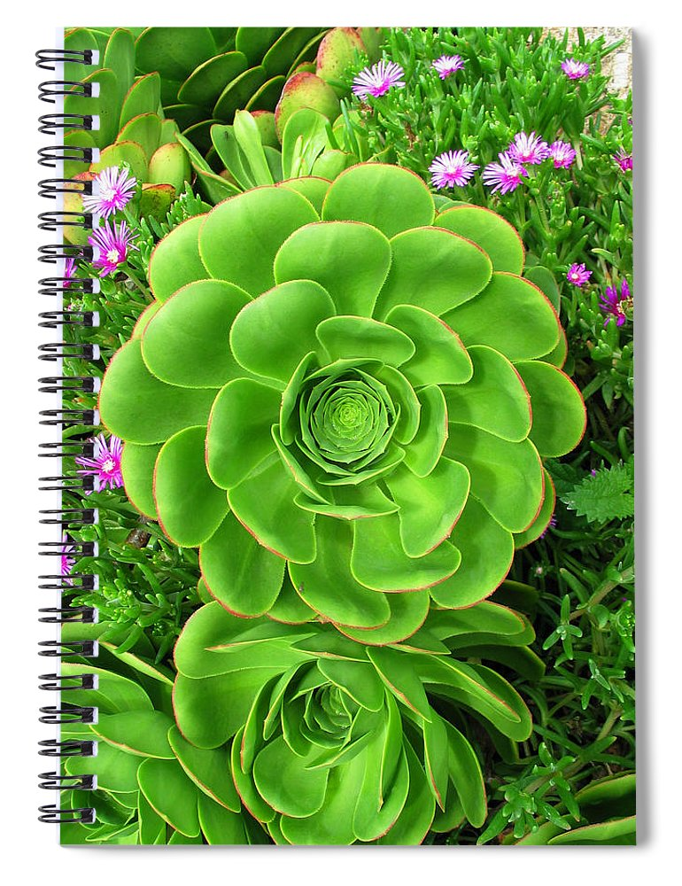 Flowerbed Spiral Notebook featuring the photograph Ornamental Succulent Aeonium Pinwheel by Lubilub
