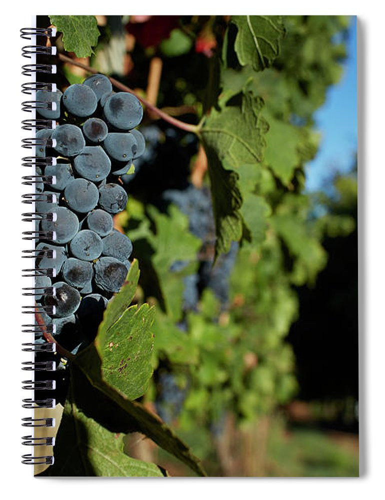 Stellenbosch Spiral Notebook featuring the photograph Overripe Grapes Hanging On Vine by Klaus Vedfelt