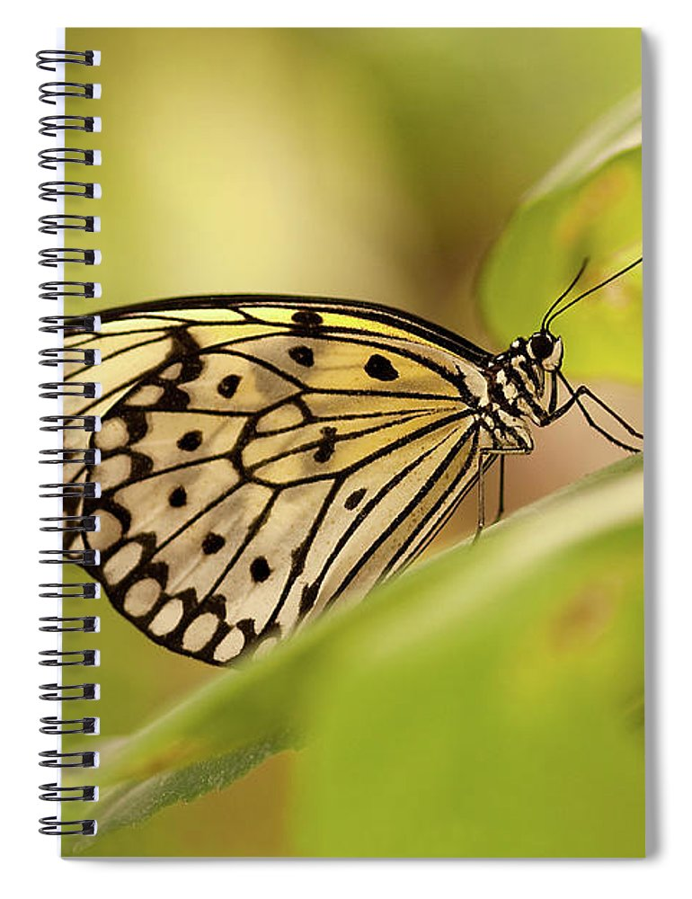 Natural Pattern Spiral Notebook featuring the photograph Paper Kite Butterfly by Photos By Jay Bee