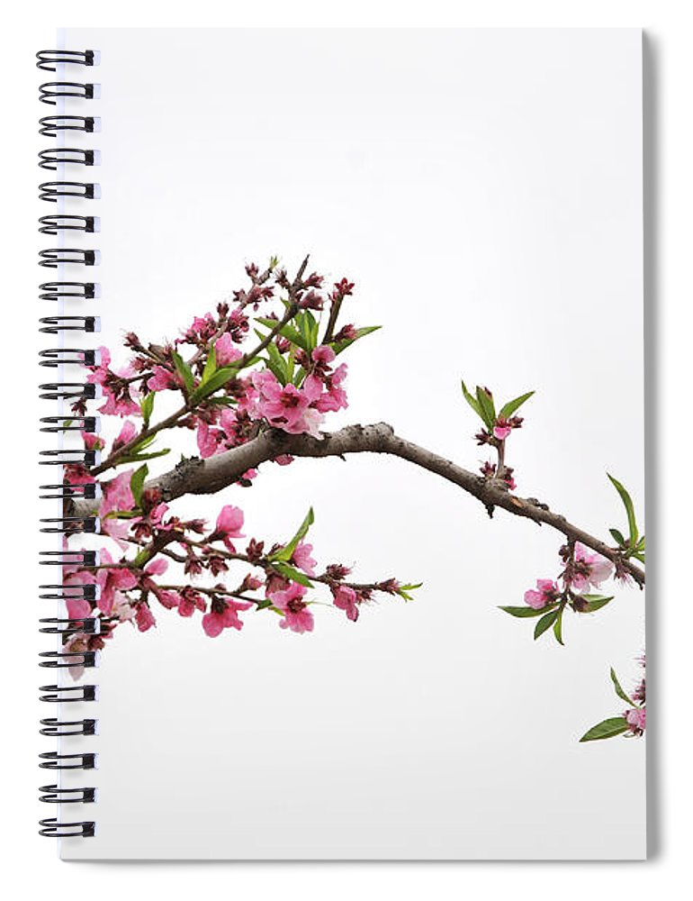 Season Spiral Notebook featuring the photograph Peach by Sdlgzps