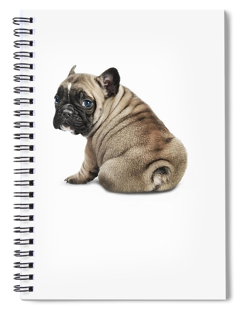 Pets Spiral Notebook featuring the photograph Pedigree French Bulldog Against A White by Andrew Bret Wallis