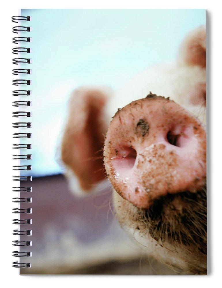 Pig Spiral Notebook featuring the photograph Pig by Matt Carr