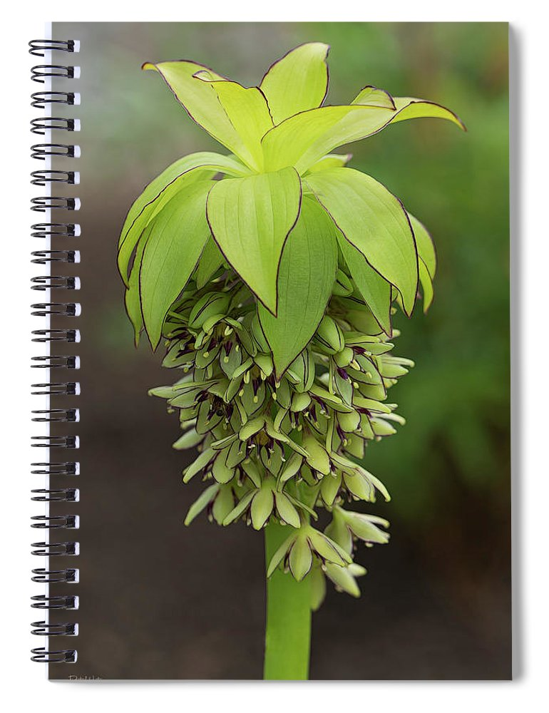 Floral Photography Spiral Notebook featuring the photograph Pineapple Lily by Pat Watson