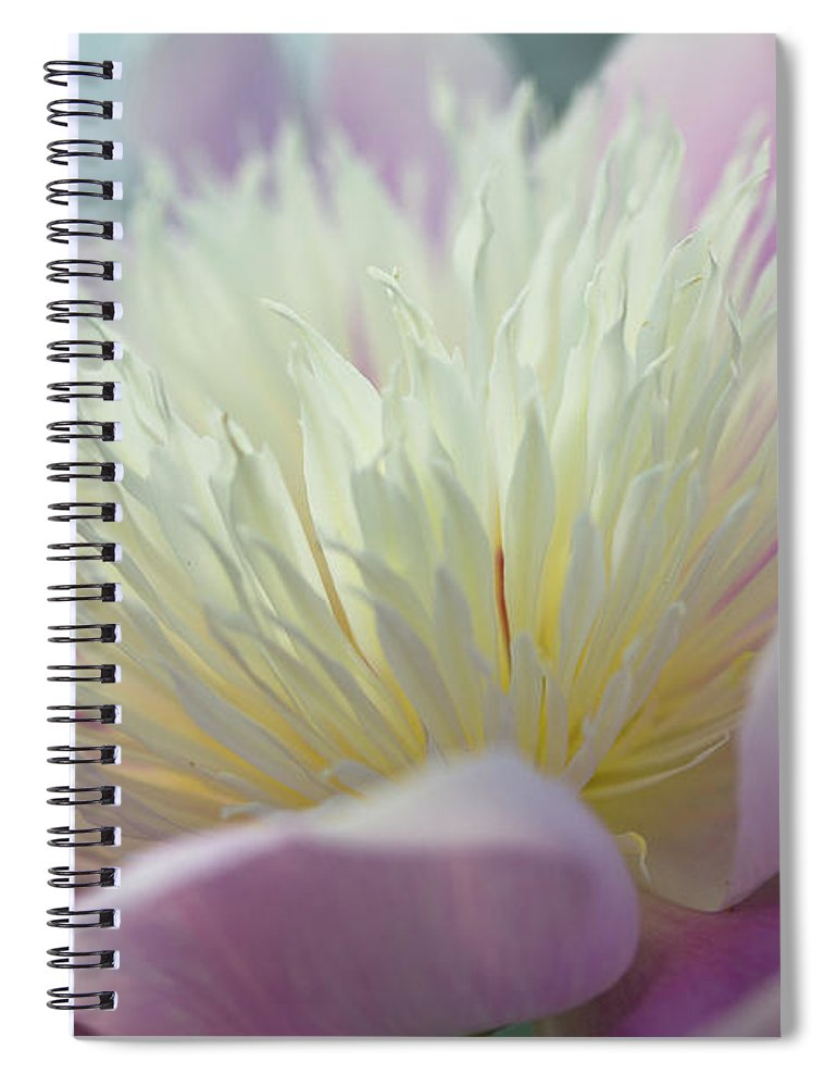 Toronto Spiral Notebook featuring the photograph Pink And White Peony by Lynda Murtha