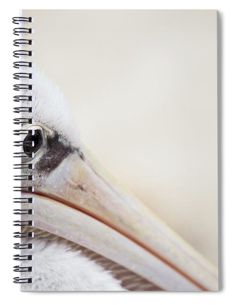 Pink Backed Pelican Spiral Notebook featuring the photograph Pink Backed Pelican by Karol Livote