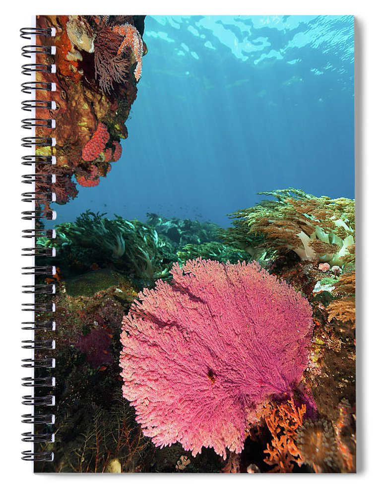 Underwater Spiral Notebook featuring the photograph Pink Gorgonian Sea Fan, Pura Island by Ifish