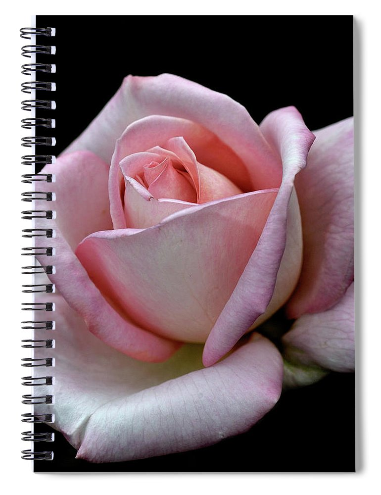 Part Of A Series Spiral Notebook featuring the photograph Pink Rose by I Love Photo And Apple.