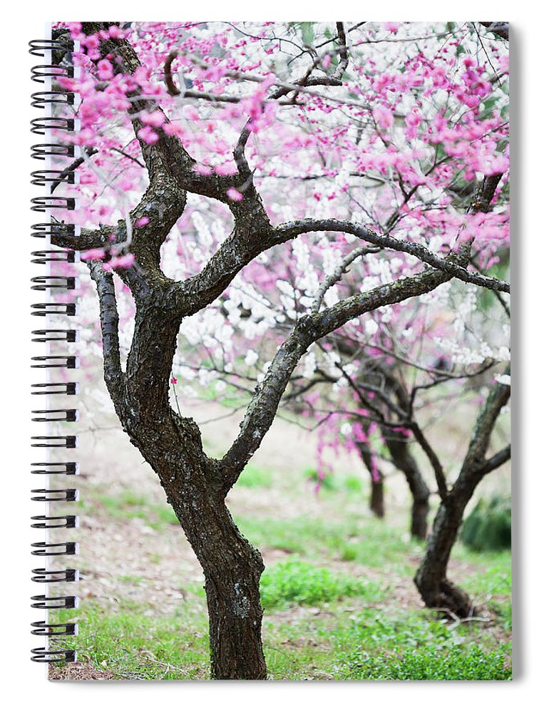 Scenics Spiral Notebook featuring the photograph Plum Blossoms by Ooyoo