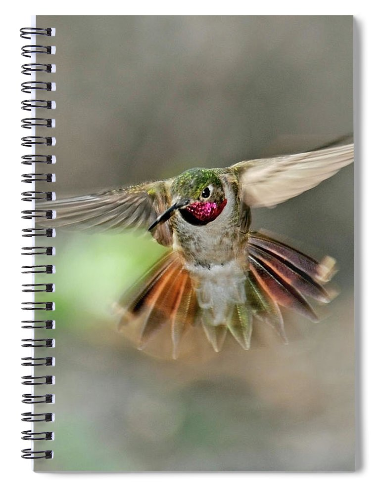 Dawn Spiral Notebook featuring the photograph Poetry In Motion - Hummingbird Hovering by Eastman Photography Views Of The Southwest