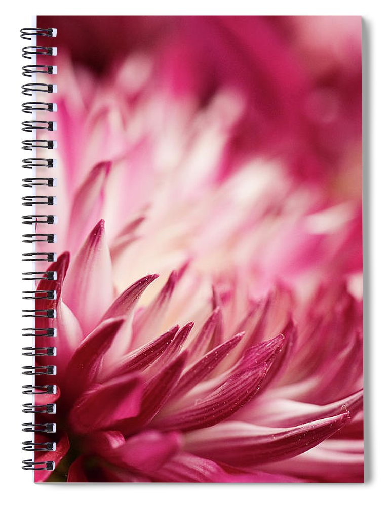 Petal Spiral Notebook featuring the photograph Poised Petals by Jody Trappe Photography