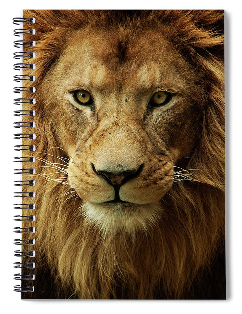 Animal Themes Spiral Notebook featuring the photograph Portrait Male African Lion by Brit Finucci