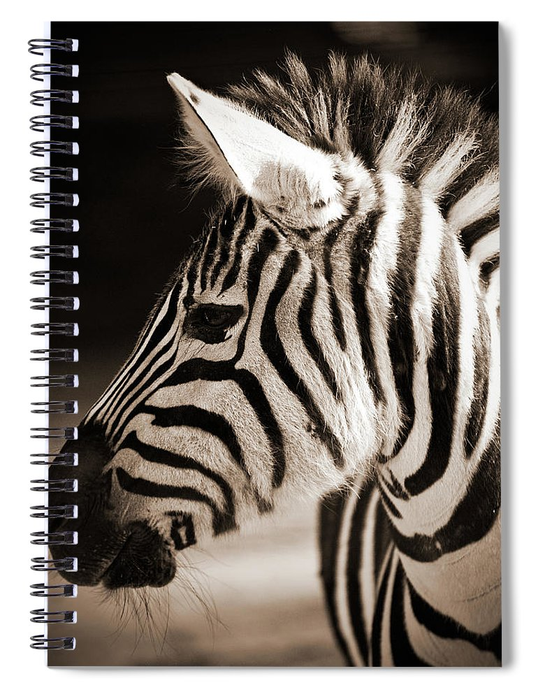 Black Color Spiral Notebook featuring the photograph Portrait Of A Young Zebra by Cruphoto