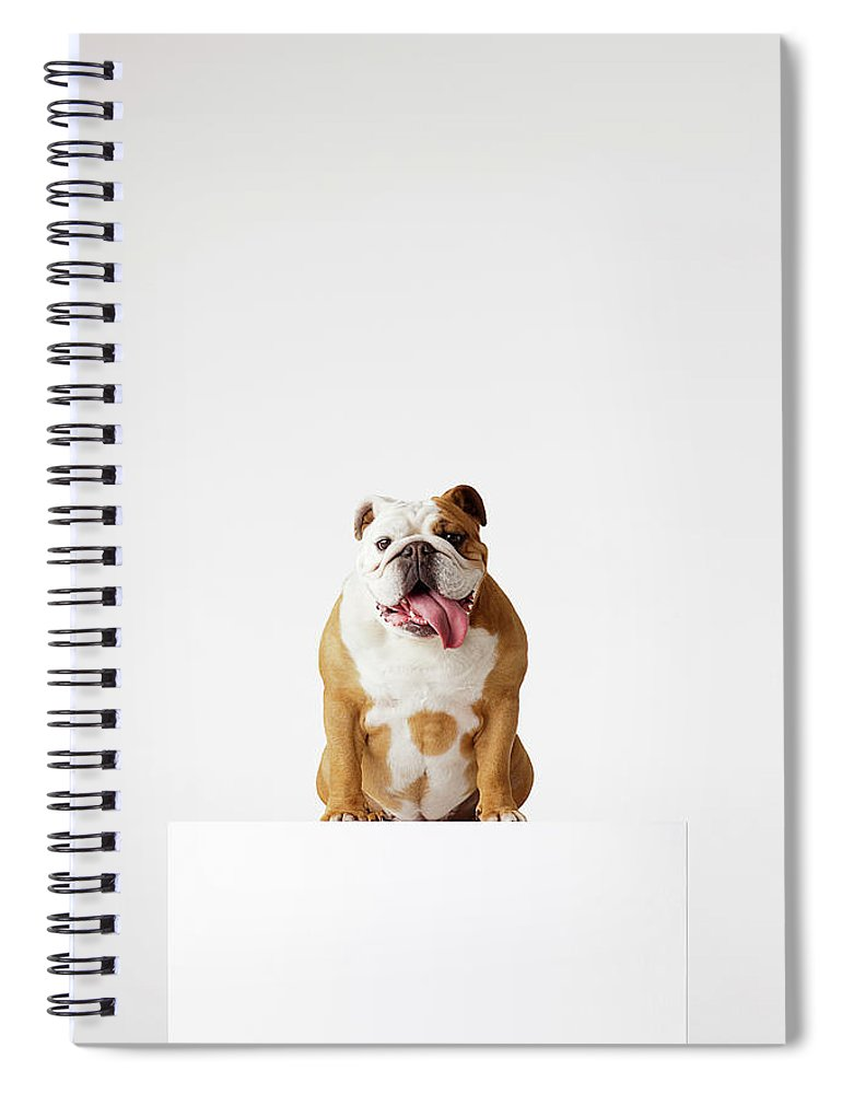 Pets Spiral Notebook featuring the photograph Portrait Of British Bulldog Sitting by Compassionate Eye Foundation/david Leahy