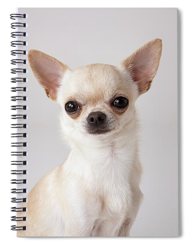 Pets Spiral Notebook featuring the photograph Portrait Of Chihuahua by Compassionate Eye Foundation/david Leahy