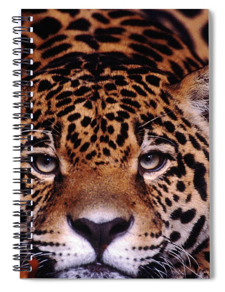 Latin America Spiral Notebook featuring the photograph Portrait Of Jaguar, Brazil by Mark Newman