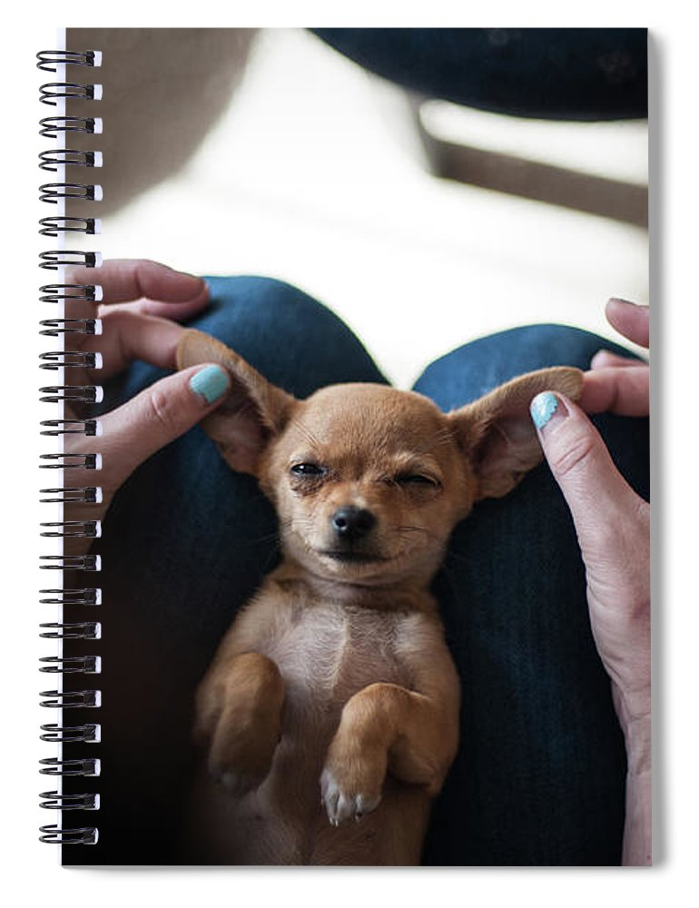 Pets Spiral Notebook featuring the photograph Pov - Pets by Jono Winnel