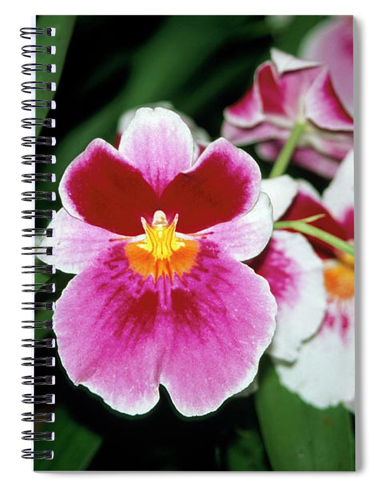 Part Of A Series Spiral Notebook featuring the photograph Pretty Pink Iris Flowers In Keukenhof by Andrew Holt