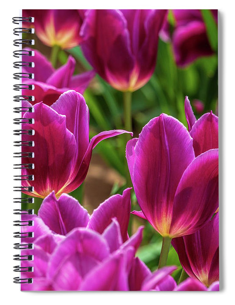 Flowers Spiral Notebook featuring the photograph Pretty Purple Tulips by Louis Dallara