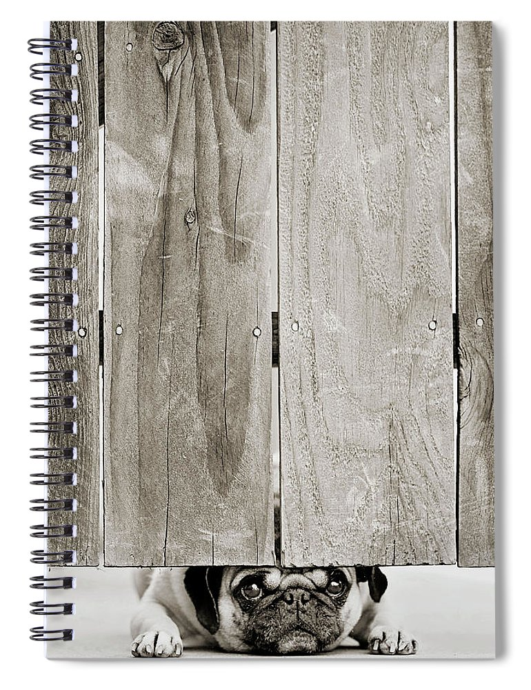 Pets Spiral Notebook featuring the photograph Pug Face by Aaryn James