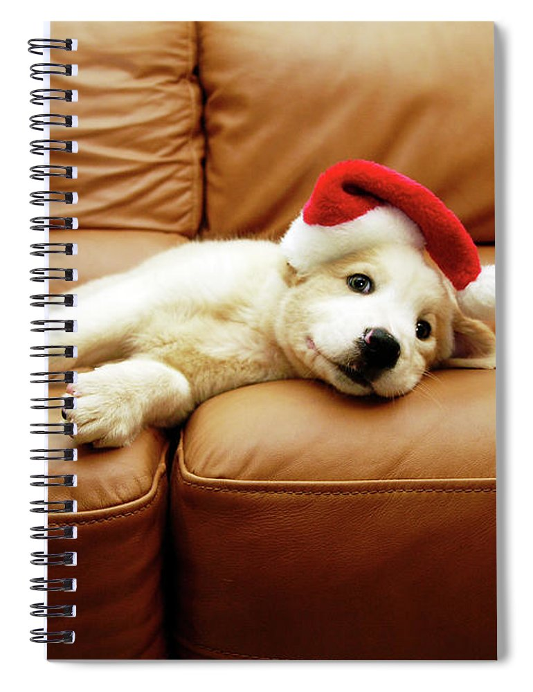 Pets Spiral Notebook featuring the photograph Puppy Wears A Christmas Hat, Lounges On by Karina Santos