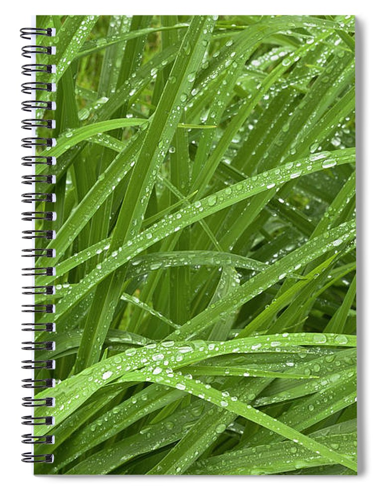 Tranquility Spiral Notebook featuring the photograph Raindrops Of Daylily Foliage by Adam Jones