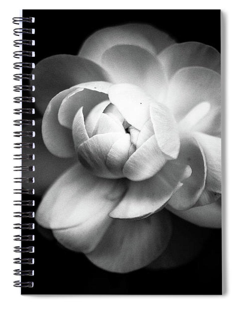 Black Background Spiral Notebook featuring the photograph Ranunculus Flower by Annfrau