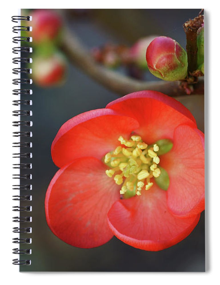 Bud Spiral Notebook featuring the photograph Red Flowering Quince by Picture By La-ong