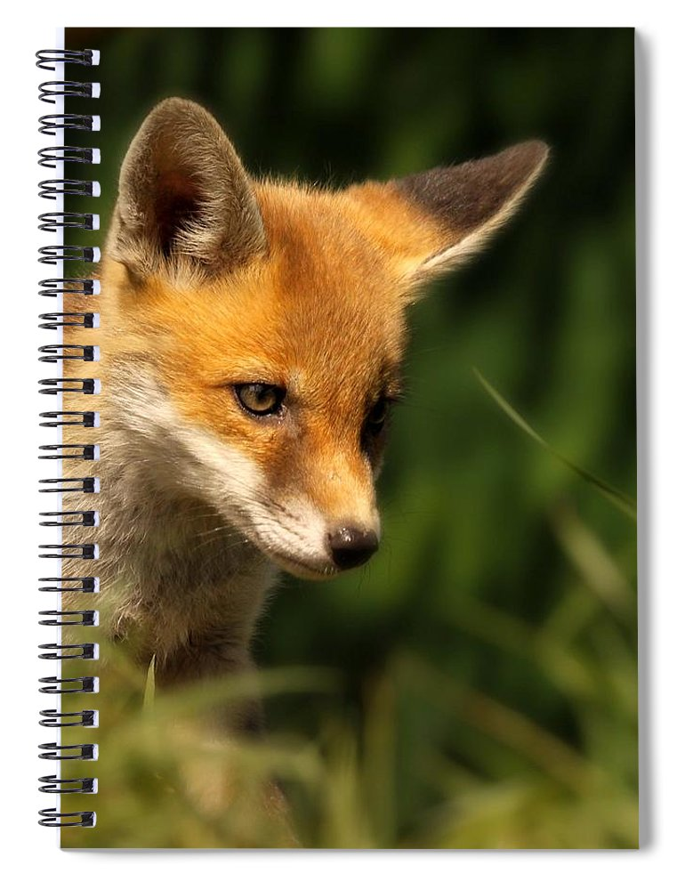 Alertness Spiral Notebook featuring the photograph Red Fox Cub In The Grass by Chris Jolley
