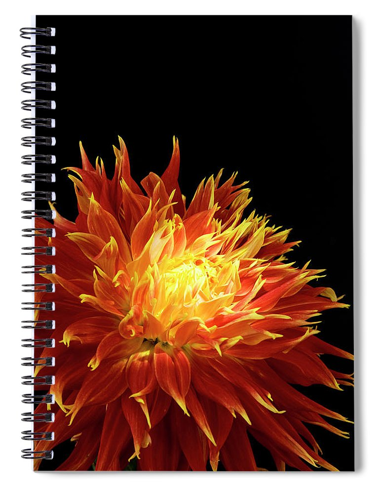 Firework Display Spiral Notebook featuring the photograph Red-yellow Dahlia Flower by Eyepix