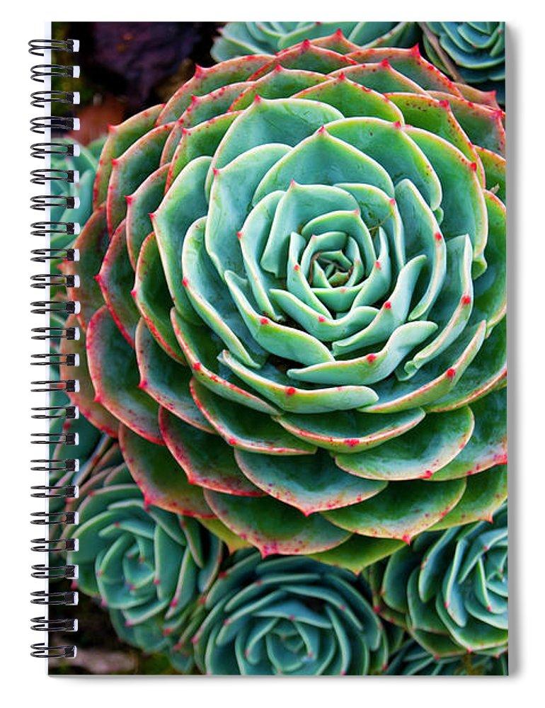San Jose Spiral Notebook featuring the photograph Repollito Echeveria Elegans Succulent by Kryssia Campos