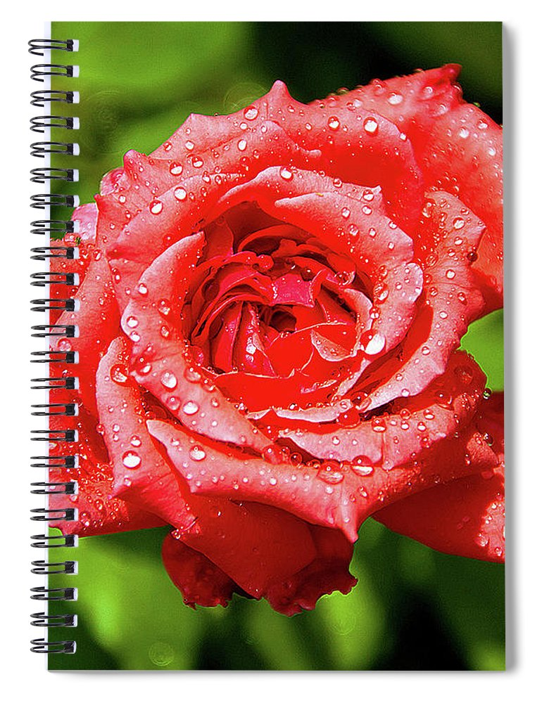 New Delhi Spiral Notebook featuring the photograph Rose With Raindrops by Charlie Joe