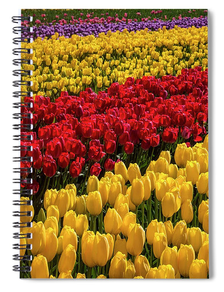 Tulip Spiral Notebook featuring the photograph Row After Row After Row Of Tulips by Garry Gay