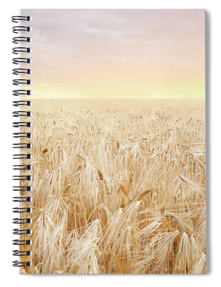 Empty Spiral Notebook featuring the photograph Rye Field by Nadyaphoto