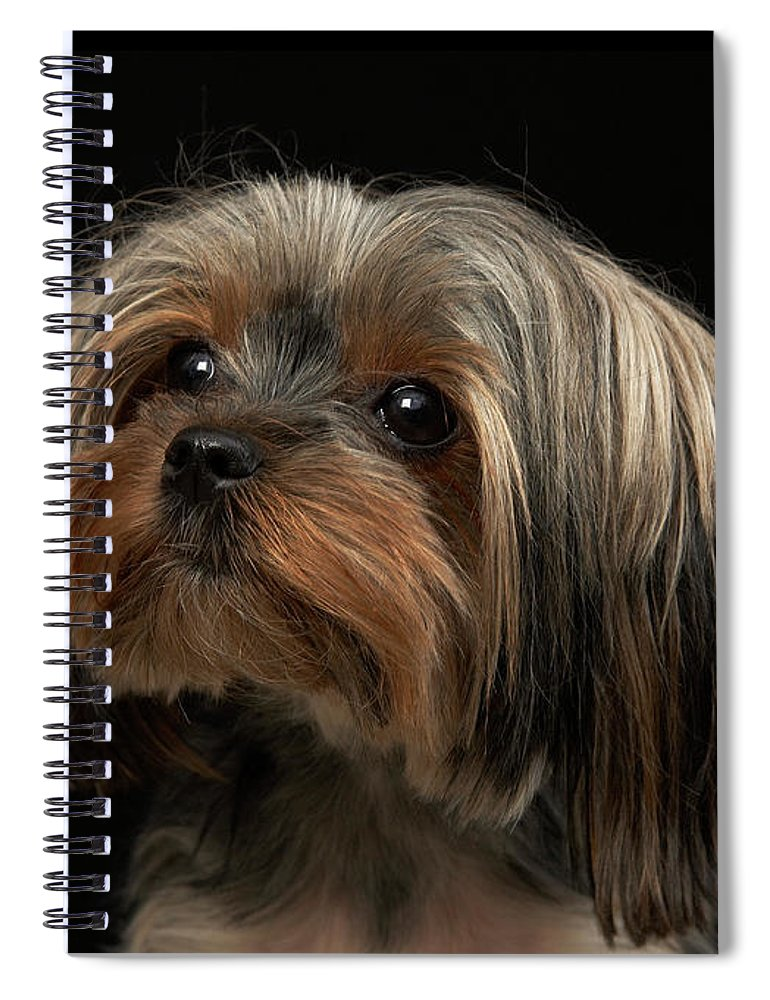 Pets Spiral Notebook featuring the photograph Sad Yorking Face Looking To The Left by M Photo