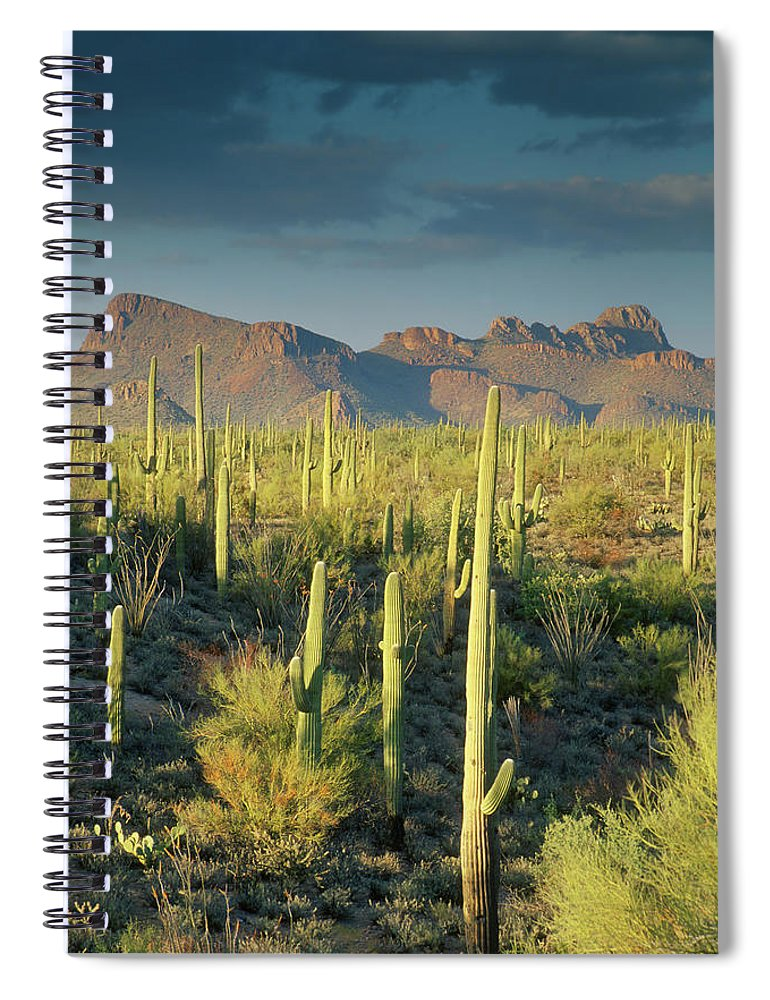 Saguaro Cactus Spiral Notebook featuring the photograph Saguaro Cactus In Sonoran Desert And by Kencanning