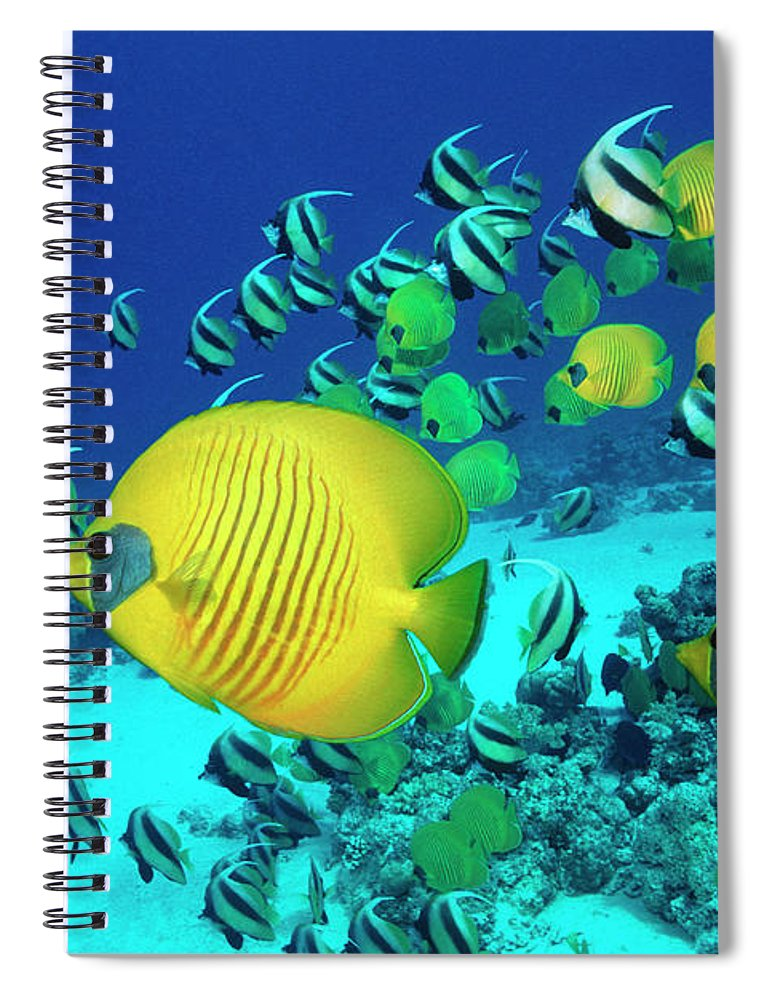 Underwater Spiral Notebook featuring the photograph School Of Butterfly Fish Swimming On by Georgette Douwma