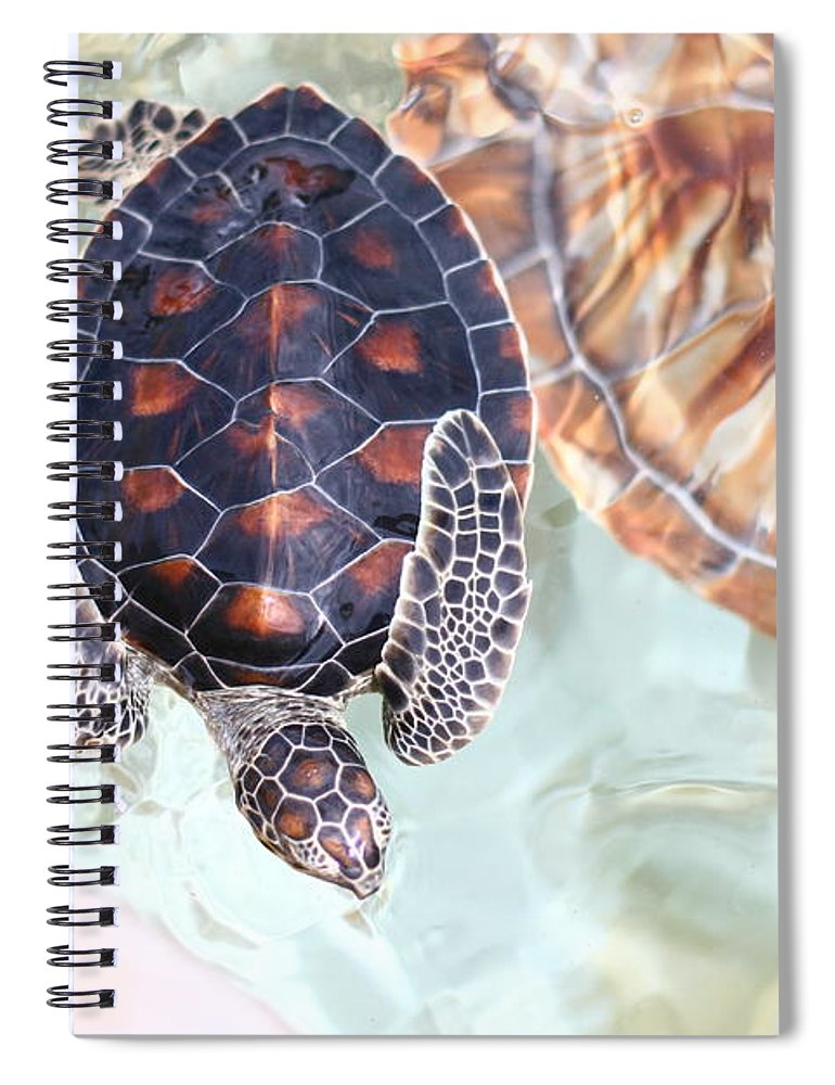 Underwater Spiral Notebook featuring the photograph Sea Turtle by Alyssa B. Young