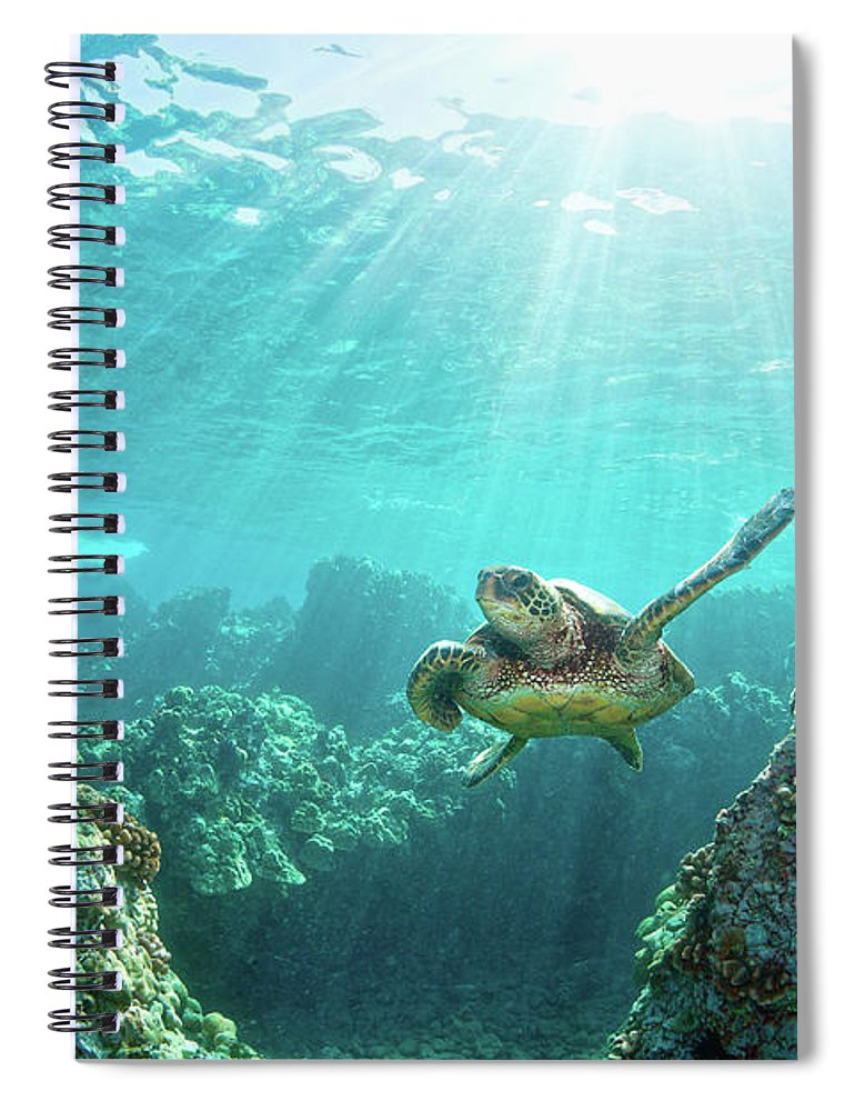 Underwater Spiral Notebook featuring the photograph Sea Turtle Coral Reef by M.m. Sweet