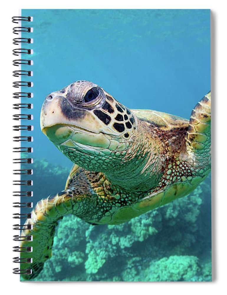 Underwater Spiral Notebook featuring the photograph Sea Turtle, Hawaii by M Swiet Productions