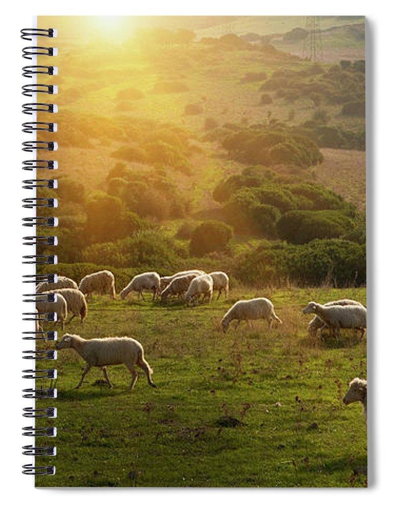 Grass Spiral Notebook featuring the photograph Sheep Grazing On Grassy Hillside by Walter Zerla