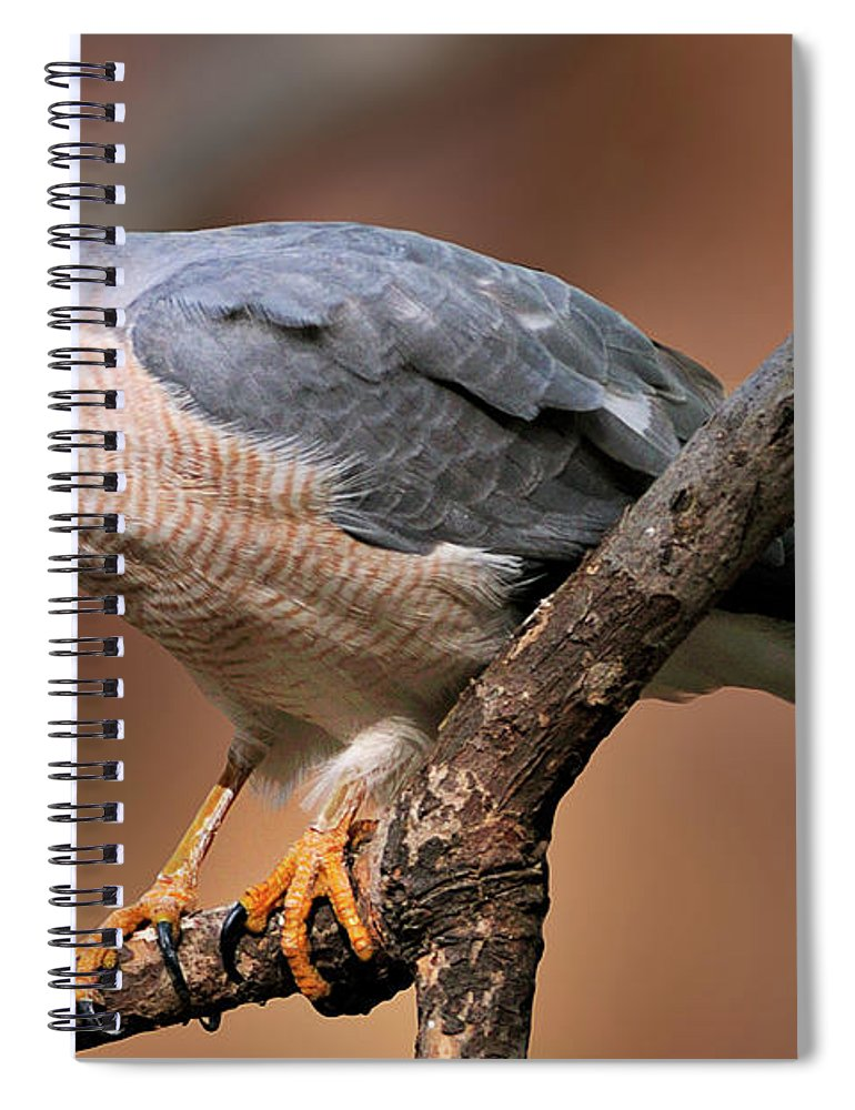 Ranthambore National Park Spiral Notebook featuring the photograph Shikra by Copyright@jgovindaraj