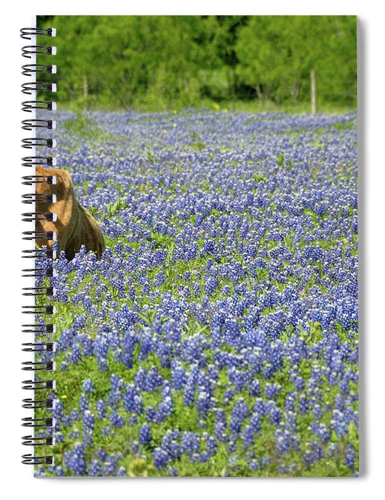 Cow Spiral Notebook featuring the photograph Single Cow Resting In A Field Of Texas by Zview