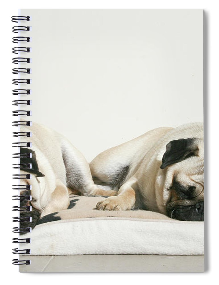 Pets Spiral Notebook featuring the photograph Sleeping Pug Dogs by Elli Luca