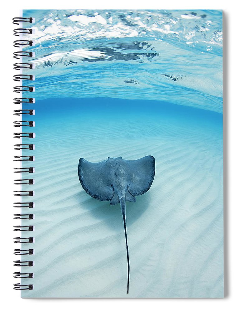 Underwater Spiral Notebook featuring the photograph Southern Sting Ray At Stingray City by Justin Lewis